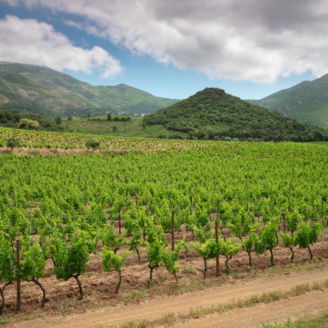 Vin rouge E crocé 2018 du domaine Yves Leccia en Corse